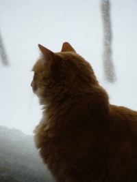 Crash stares out window into snowy day