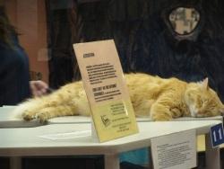 Crash asleep on display
