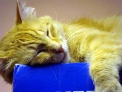 Crash asleep on blue surface