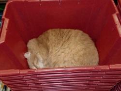 Crash asleep in bin