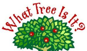 Identify Ohio's Trees--What Tree is It?